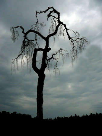 A dark tree spreads it´s omnious looking branches. Stock Photo