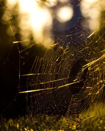 spiderweb: Spiderweb With Sunset