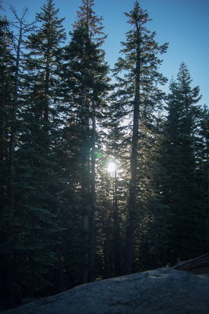 peaking: Sun Peaking Through Trees