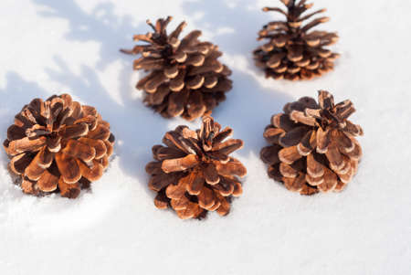 focus on foreground: pine cones in the snow. focus foreground