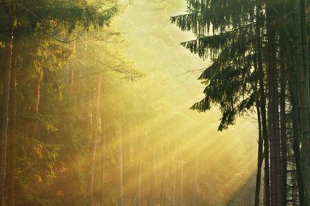 mysteus forest Stock Photo - 4964116