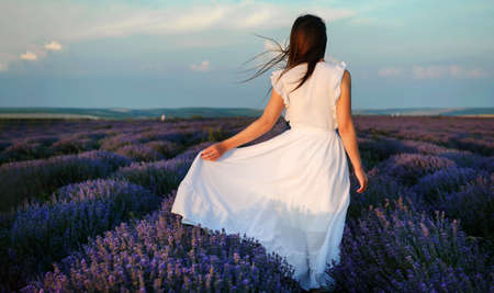Back view of a young woman in white dress walking in the lavender field. Lavender flowers in bloom. Imagens