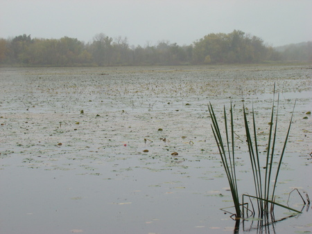 wildlife preserve: Wetland, wildlife preserve
