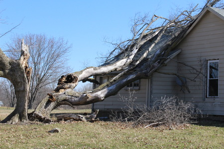 A large rotten old tree fell on a house