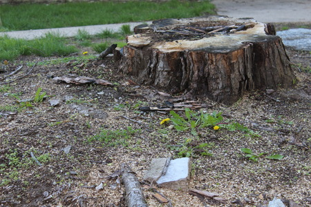 Tree Stump remaining after having a large tree removed. 免版税图像 - 40372812