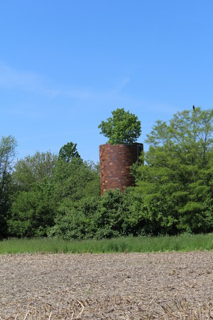 An old abandoned silo with a tree growing out of the top, and a hawk in the top of a nearby tree