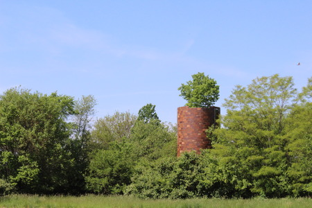 An old abandoned silo with a tree growing out of the top, and a hawk flying neareby