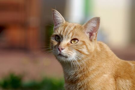the pretty red cat has her eyes curiously upwards