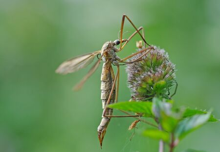 gnats can damage the lawn Stock Photo