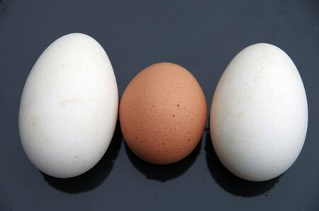 Chicken egg and goose egg
