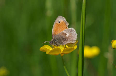 a small butterfly sits in the meadow