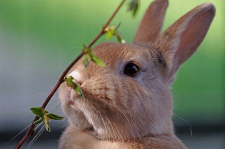 rabbit nibbles on a branch