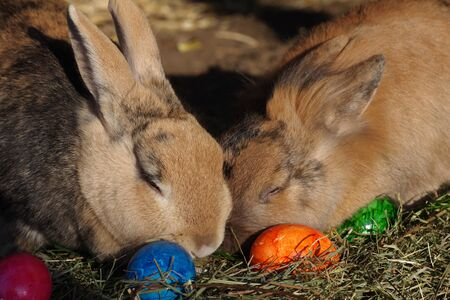 two brown rabbits sits in anest with easter eggs