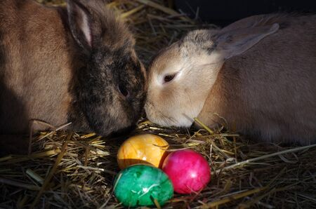 two bunnies and colorful eggs