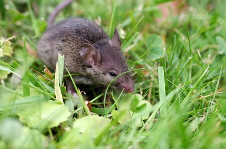a small mouse sits in the green meadow