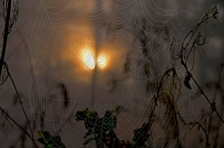 a spider web with fog drops