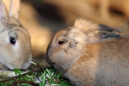 close up of two rabbits in the warm light of sun