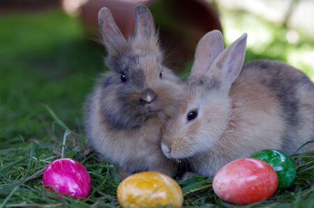 colorful easter eggs and two young rabbits