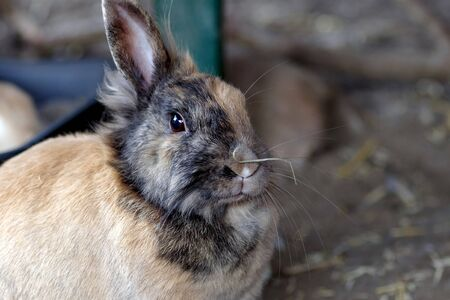 cute rabbit has a straw on its nose