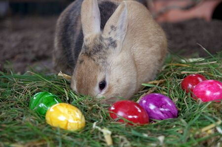 Easter time, a rabbit and lots of colorful Easter eggs