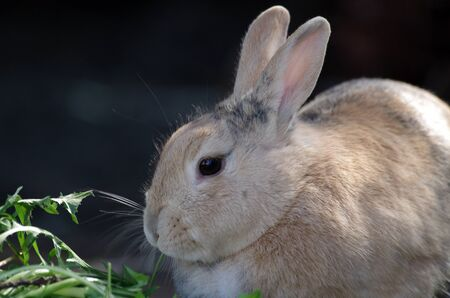 A close-up of a cute rabbit while it eats Standard-Bild