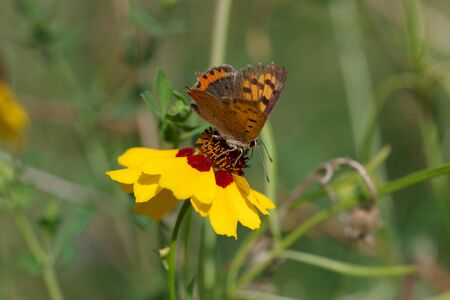 pretty little butterfly sits on a colored flower in summer Standard-Bild