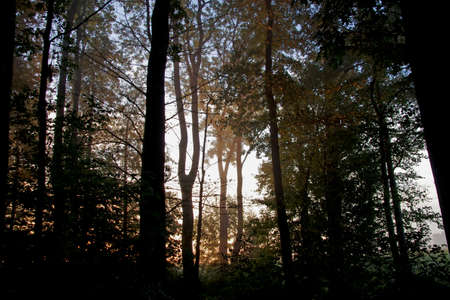 Atmospheric mood in the forest, the silhouettes of the trees appear in a special light