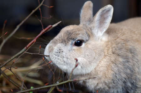 a rabbit nibbles on fresh branches, closeup