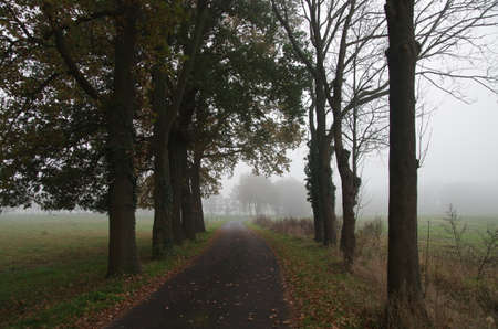 A country road in autumn with fog and autumn leaves on the asphalt Standard-Bild