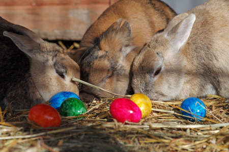three easter bunnies and many colorful easter eggs