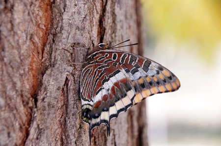 a large, colorful butterfly sits on a tree bark