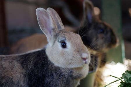 portrait shot of a brown rabbit