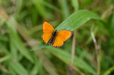 A butterfly is sitting on green leaves