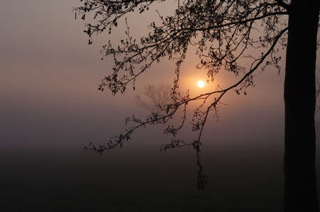 the morning light enchants the landscape, tree silhouettes appear in the sunrise