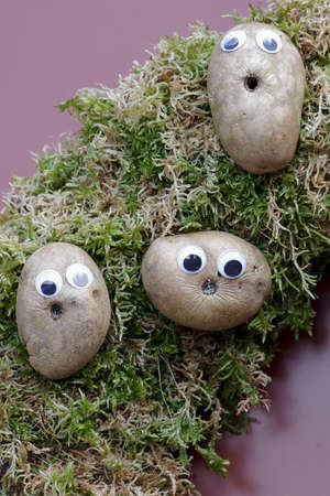 funny potatoes with glued eyes, a decoration idea Standard-Bild