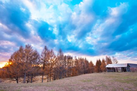 yellow trees: Grassland and yellow trees at dusk Stock Photo