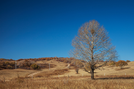 rural area: Dried trees in a rural area