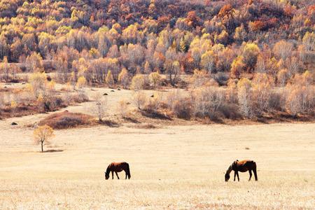prairie: Prairie horse Stock Photo