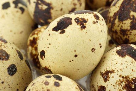 huevos de codorniz: Huevos de codorniz