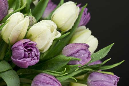 flower bouquet: Tulips bouquet