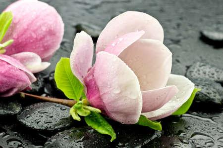 Flowers magnoli on basaltic stones