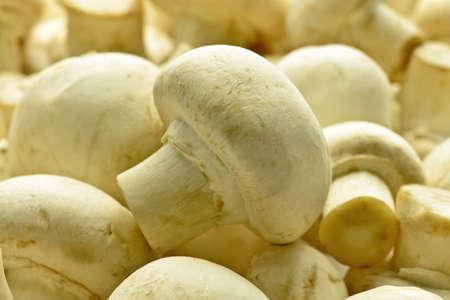champignons: Fresh champignons