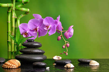 Orchid with basalt stones and shells