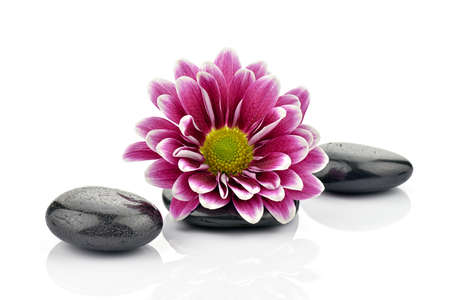 Chrysanthemums with stones for spa