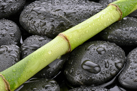 Bamboo on stones of basaltic