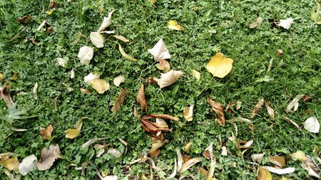 Dry yellow and brown leaves of the trees lie on the bright green grass. Summer is losing ground, autumn is coming.