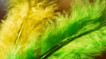 Yellow and green gentle curved bird feathers. The pen is painted for ornamental and decorative handicrafts. Used for holidays, to complement costumes and hats, in the manufacture of souvenirs