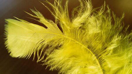 Yellow fluffy feather on a dark background. Close-up. Reklamní fotografie