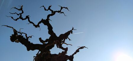Silhouette of a tree without leaves on a background of blue sky, sun rays and a flying plane. A clear sky shows a trace of jet fuel in the form of a white strip. White sun below right.