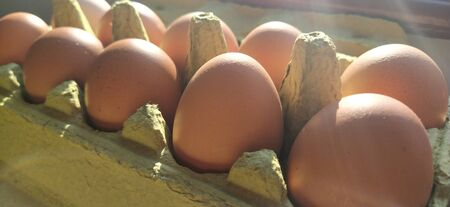 Chicken eggs in a carton. Beige eggs in a container when illuminated by spring sunlight. Ingredients. Agricultural products. Farm food. Proper protein nutrition. Recycled packaging. Demography concept
